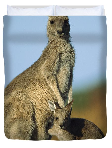 Eastern Grey Kangaroo And Her Joey Duvet Cover by Ingo Arndt