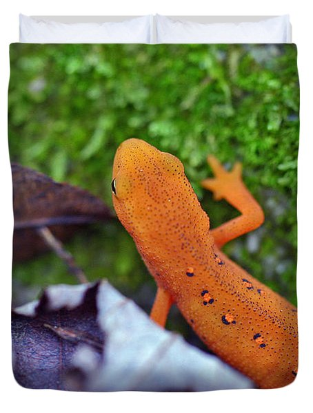 Eastern Newt Duvet Cover by David Rucker