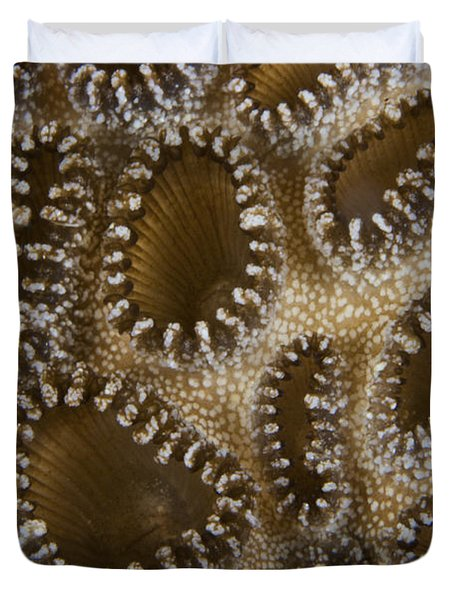 Extreme Close-up Of A Crust Anemone Duvet Cover by Terry Moore