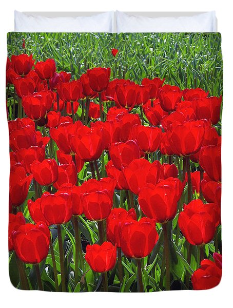Field of Red Tulips Duvet Cover by Sharon  Talson
