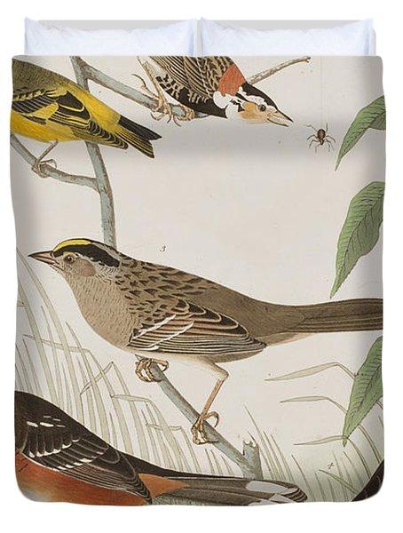 Finches Duvet Cover by John James Audubon