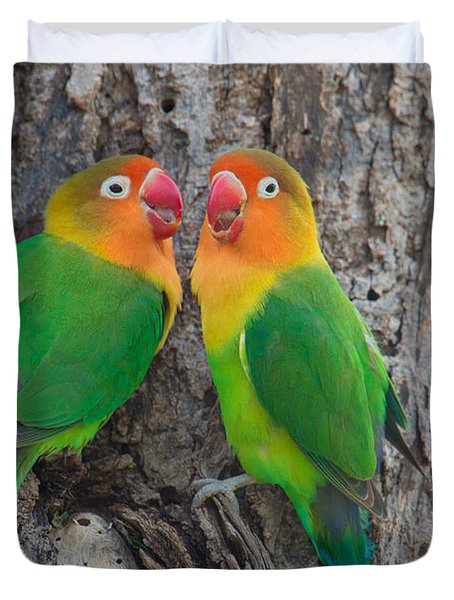 Fischers Lovebird Agapornis Fischeri Duvet Cover by Panoramic Images