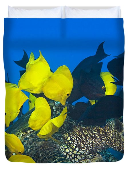 Fish cleaning turtle Duvet Cover by Dave Fleetham - Printscapes