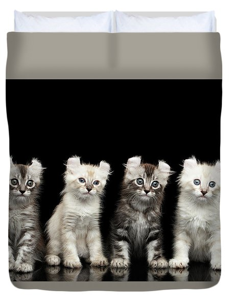 Four American Curl Kittens With Twisted Ears Isolated Black Background Duvet Cover by Sergey Taran