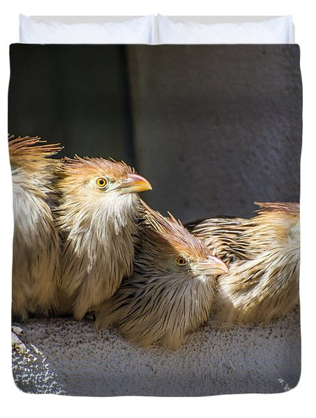 Four Stooges - Guira Cuckoos Duvet Cover by Gary Whitton