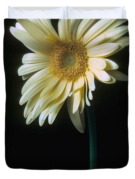 Gerber Daisy Duvet Cover by Laurie Paci