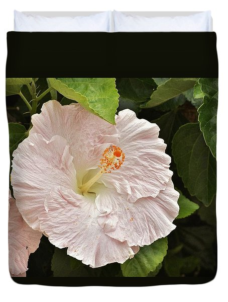 giant pink hibiscus i photograph by linda brody. Black Bedroom Furniture Sets. Home Design Ideas