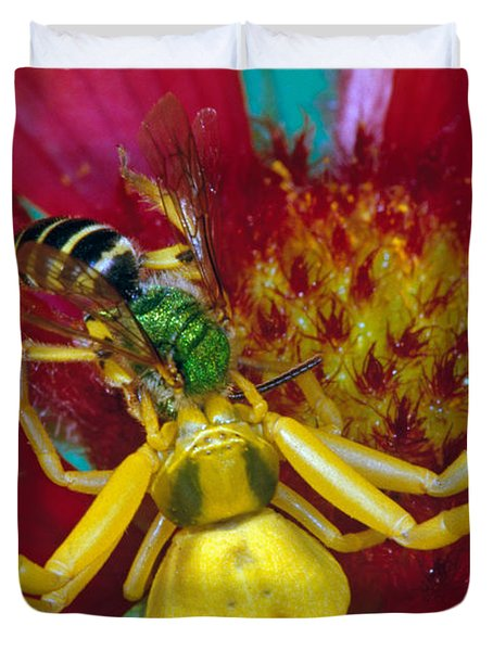 Goldenrod Crab Spider Misumena Vatia Duvet Cover by Panoramic Images