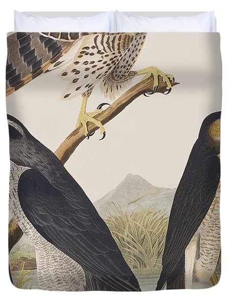 Goshawk And Stanley Hawk Duvet Cover by John James Audubon