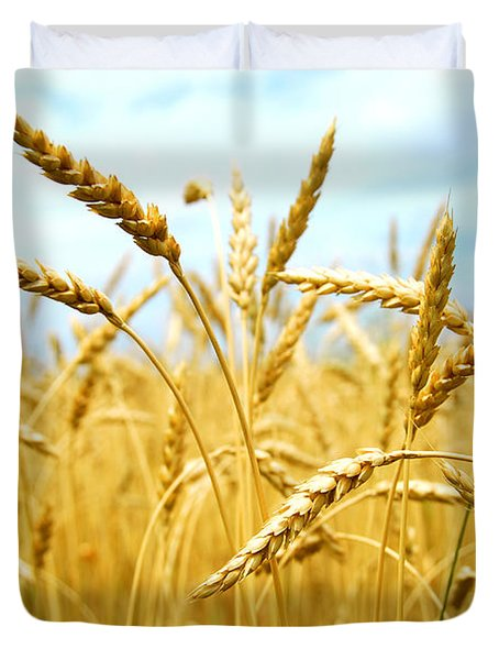 Grain Field Duvet Cover by Elena Elisseeva