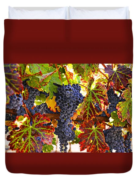 Grapes on vine in vineyards Duvet Cover by Garry Gay