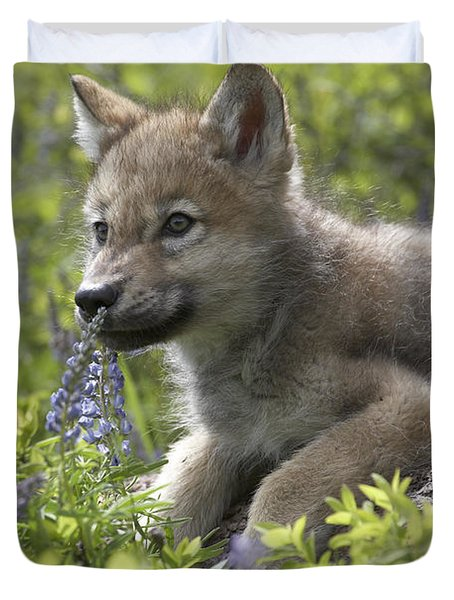 Gray Wolf Canis Lupus Pup Amid Lupine Duvet Cover by Tim Fitzharris