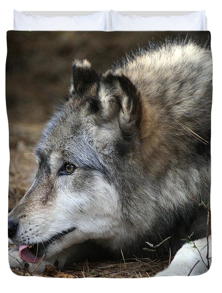 Gray Wolf Duvet Cover by Karol Livote