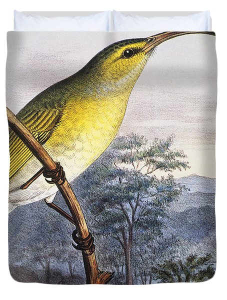 Greater Akialoa Duvet Cover by Hawaiian Legacy Archive - Printscapes