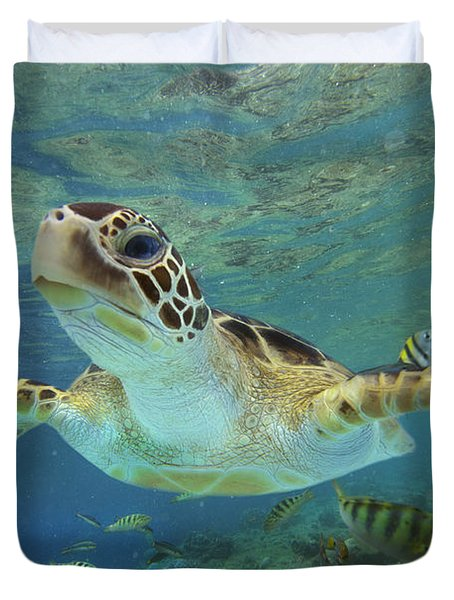 Green Sea Turtle Chelonia Mydas Duvet Cover by Tim Fitzharris
