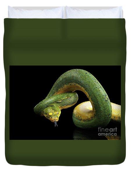 Green Tree Python. Morelia Viridis. Isolated Black Background Duvet Cover by Sergey Taran