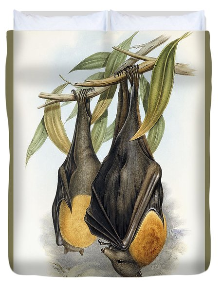 Grey Headed Flying Fox, Pteropus Poliocephalus Duvet Cover by John Gould