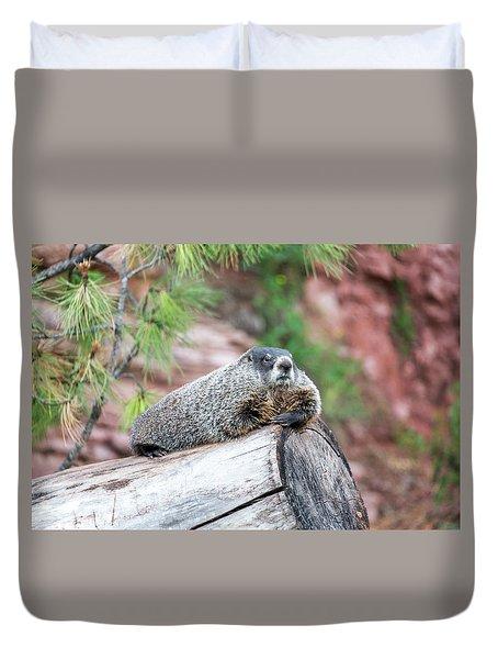 Groundhog On A Log Duvet Cover by Jess Kraft