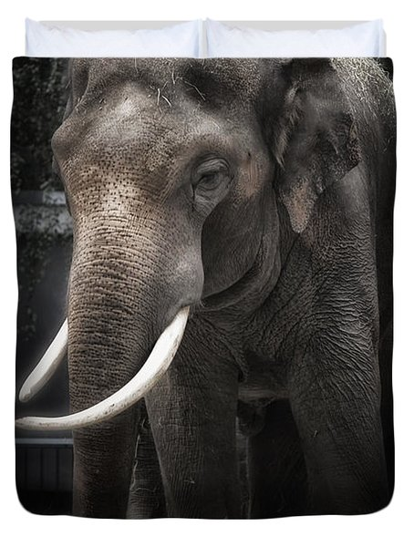 Hanging Out Duvet Cover by Joan Carroll