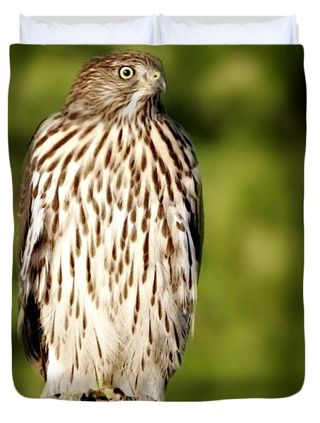 Hawk Waiting For Prey Duvet Cover by Christine Till