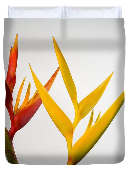 Heliconia Duvet Cover by Tomas del Amo - Printscapes