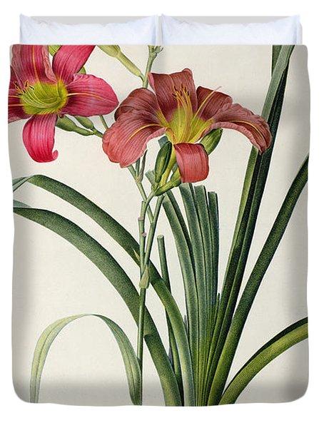 Hemerocallis Fulva Duvet Cover by Pierre Joseph Redoute