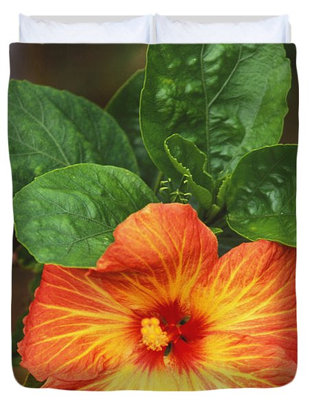 Hibiscus Duvet Cover by Allan Seiden - Printscapes