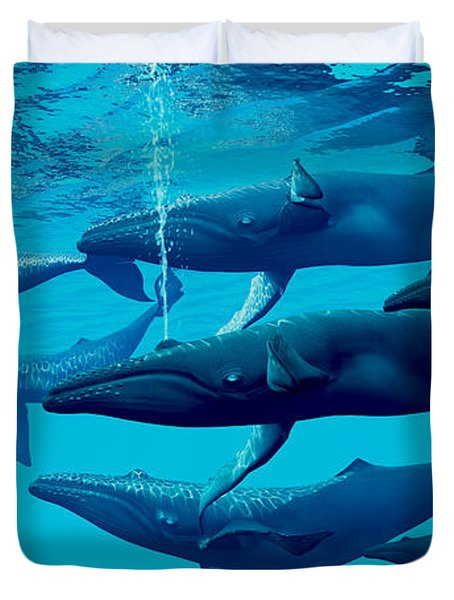 Humpback Whale Group Duvet Cover by Corey Ford
