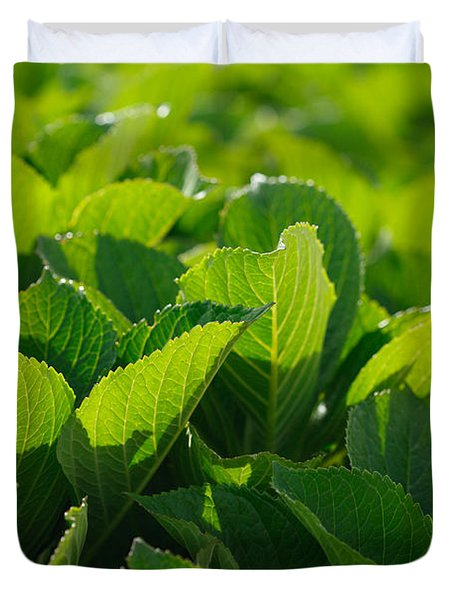 Hydrangea Foliage Duvet Cover by Gaspar Avila