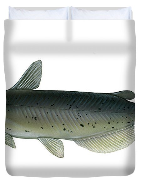 Illustration Of A Channel Catfish Duvet Cover by Carlyn Iverson