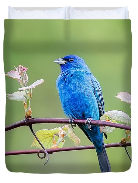 Indigo Bunting Perched Duvet Cover by Bill Wakeley