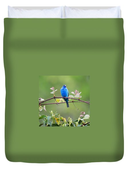Indigo Bunting Perched Square Duvet Cover by Bill Wakeley