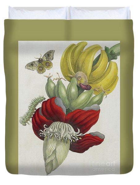 Inflorescence Of Banana, 1705 Duvet Cover by Maria Sibylla Graff Merian
