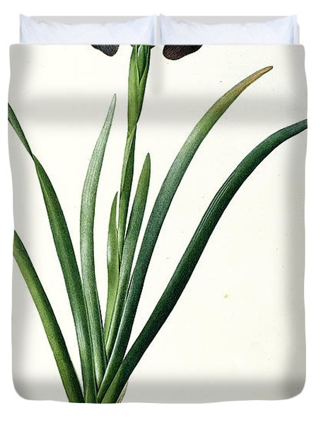 Iris Luxiana Duvet Cover by Pierre Joseph  Redoute