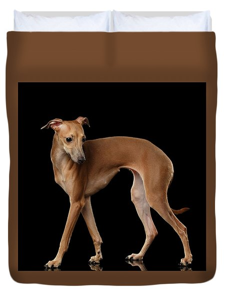 Italian Greyhound Dog Standing  Isolated Duvet Cover by Sergey Taran