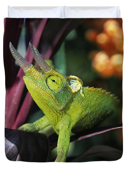 Jacksons Chameleon on Leaf Duvet Cover by Dave Fleetham - Printscapes