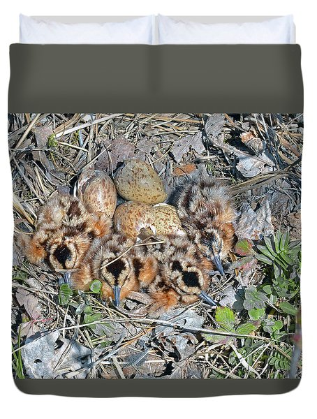 Just Hatched American Woodcock Chicks Duvet Cover by Asbed Iskedjian