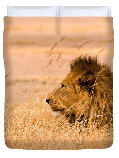 King Of The Pride Duvet Cover by Adam Romanowicz