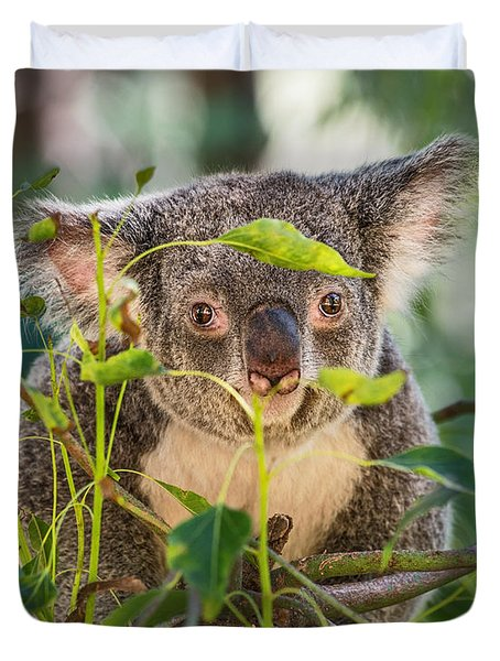 Koala Leaves Duvet Cover by Jamie Pham