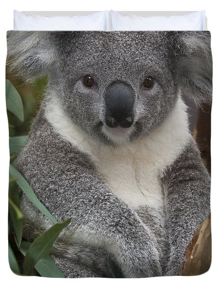 Koala Phascolarctos Cinereus Duvet Cover by Zssd