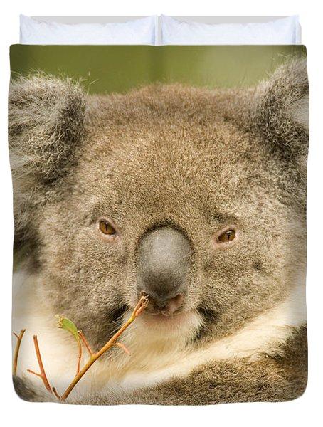 Koala Snack Duvet Cover by Mike  Dawson
