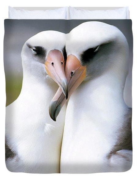 Laysan Albatross Phoebastria Duvet Cover by Tui De Roy