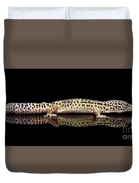 Leopard Gecko Eublepharis Macularius Isolated On Black Background Duvet Cover by Sergey Taran