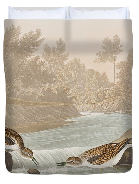 Little Sandpiper Duvet Cover by John James Audubon