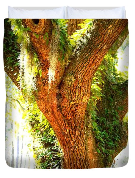 Live Oak With Cypress Beyond Duvet Cover by Carol Groenen