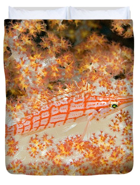 Longnose Hawkfish Duvet Cover by Dave Fleetham - Printscapes