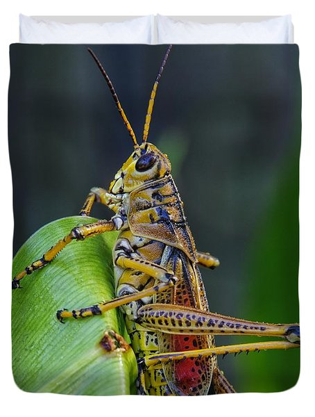 Lubber Grasshopper Duvet Cover by Richard Rizzo