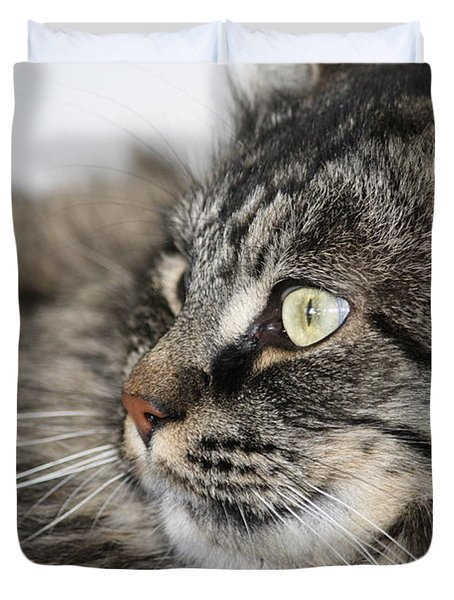 Maine Coon Cat Duvet Cover by Mary-Lee Sanders