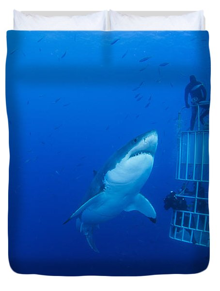 Male Great White With Cage, Guadalupe Duvet Cover by Todd Winner