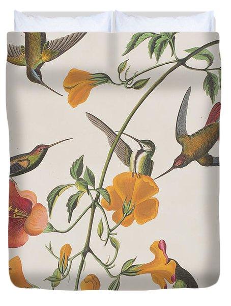 Mango Humming Bird Duvet Cover by John James Audubon